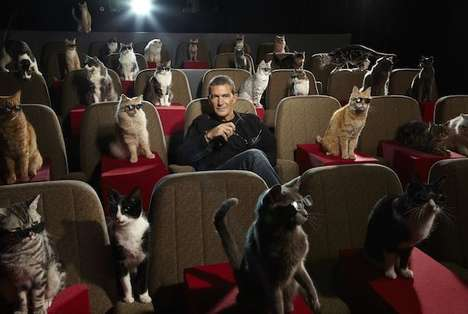 Adoptive Cat Cinemas - Great Kittens' Cat Cinema is a Place to Watch a Movie with a Feline Friend