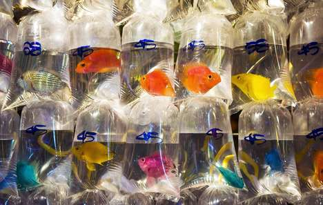 Exotic Pet Markets - This Hong Kong Market Boasts a Vast Variety of Exotic Sea Creatures