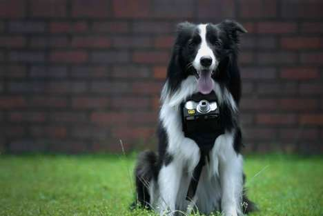 Canine-Controlled Cameras - Nikon's Heartography is a Camera for Dogs Activated by Heartbeat
