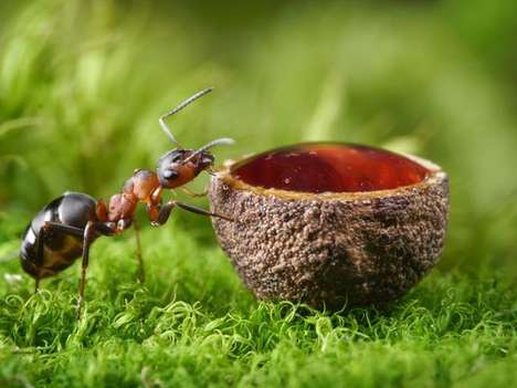 Ant-Infused Gins - Anty Gin is Distilled With the Essence of Red Wood Ants