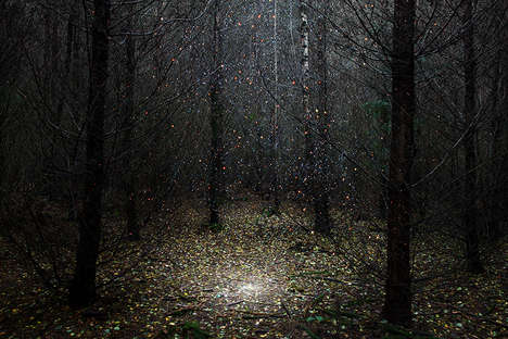 Starry Forest Photography - Ellie Davies Superimposes Hubble Imagery On Top of Wooded Areas