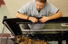 Treatment Facilities for Military Working Dogs