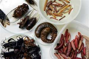 Insect Cuisine to Preserve the Environment