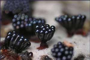Amazing Slime Photography
