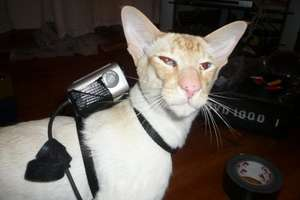 The 'CatCam' How-To