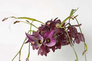 Danish Art Flower Photography
