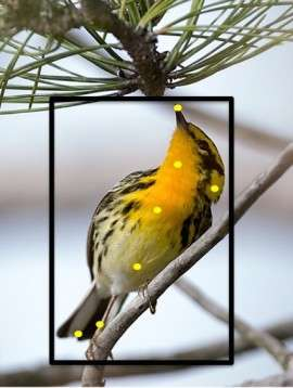 Bird-Identifying Software Programs - The Merlin Bird Photo ID Identifies Birds From Photographs