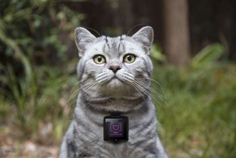 20 Examples of Wearables for Pets - From Dog Fitness Monitors to Feline Photography Tools