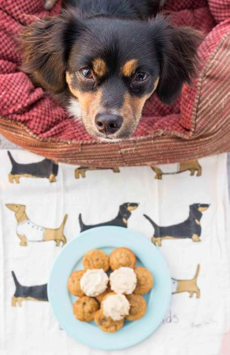Pet-Friendly Banana Cakes - These Mini Banana 'Pupcakes' Make the Perfect Doggy Dessert