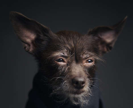 Expressive Pet Portraits