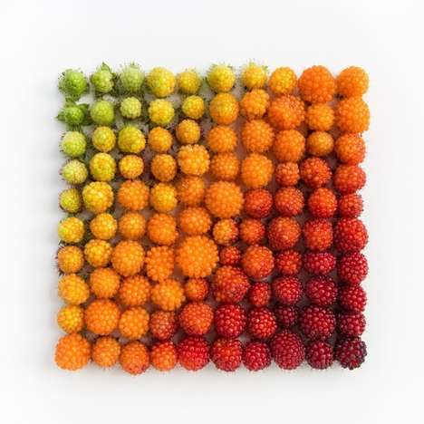 Visually Organized Objects (UPDATE) - Emily Blincoe Continues Her 'Arrangement' Series with Zest