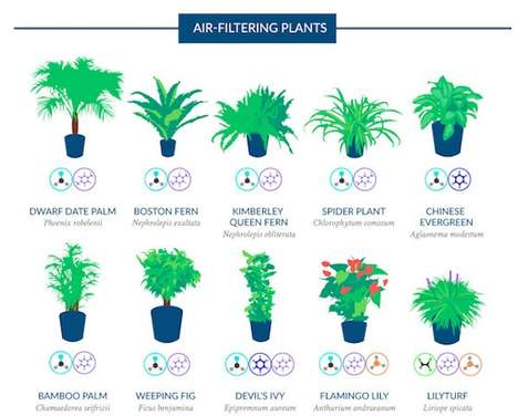 Air-Filtering Plant Guides - This Infographic Explains Purifying House Plants and Indoor Air Toxins