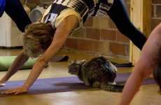 Feline-Friendly Yoga Classes - 'Yoga at Connie's' Recently Held a Special Yoga Session with Cats