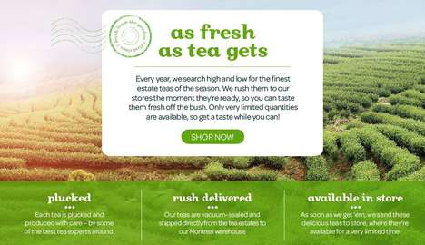 Geographical Tea Branding - David's Tea Products Boast Region and Harvesting Info When Purchased