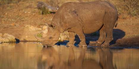 Anti-Poaching Beers - This Beer is Made from Fake Rhino Horns to Raise Awareness About Real Rhinos