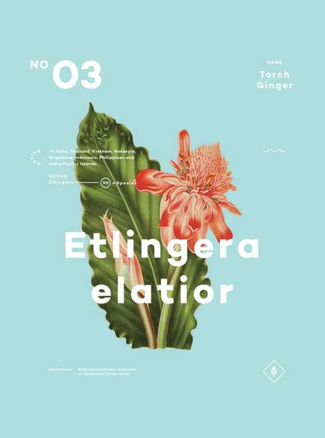 Nature-Loving Poster Collections - A Few Plants by Ben Biondo Looks Straight Out of a Textbook