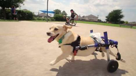Compassionate Tissue Commercials - Kleenex's 'Unlikely Best Friends' Stars Chance the Paraplegic Dog