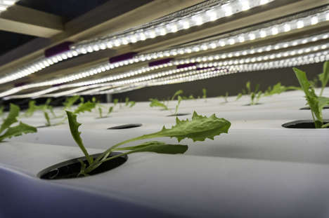 Energy-Saving Growth Lights - These LED Lights are Designed to Help Grow Plants Indoors