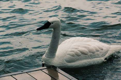 Water-Monitoring Robotic Swans - These Robot Swans Help Provide Data-Driven Water Testing