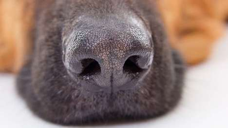 Canine-Inspired Diagnostic Tools - This Dog's Nose-Inspired Technology Could Sniff Out Disease