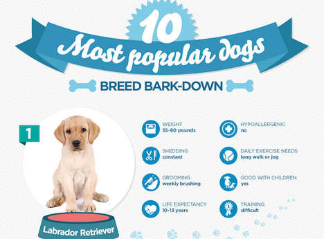 Popular Dog Breed Guides - The Infographic on the Most Popular Dogs is Informative For Future Owners