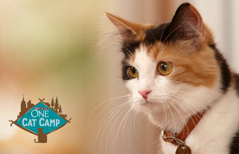 Branded Cat Camps - The Purina ONE Cat Camp is an Immersive Pop-Up for Feline Friends