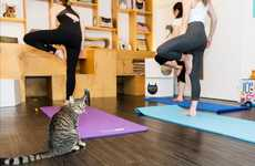 Feline Yoga Classes - This Cafe is Offering Cat Yoga Classes to Help the Animals Find New Homes