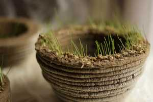 printGREEN Uses 3D Technology to Print Living Plants