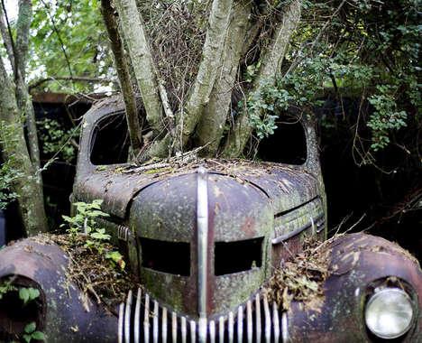 Car Graveyard Photography