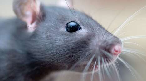 Robotic Whiskers - These Whiskers Can Help Navigate Obstacles and Obscured Environments