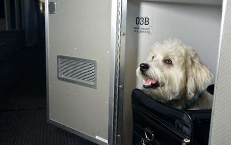 Luxury Pet Plane Cabins - These Designated Cabins Make Flying with a Pet Classy on American Airlines