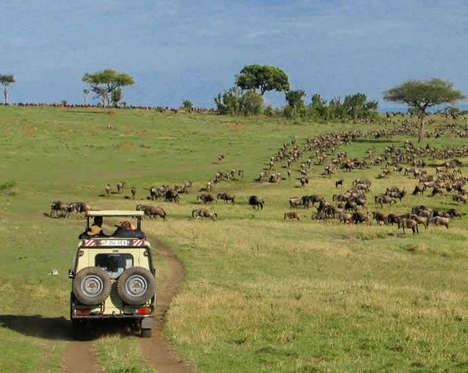 13 Animal Travel Tours - From Dog Sled Taxi Services to Extensive African Tours