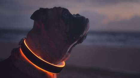 LED Smart Dog Collars - The 'Buddy' Smart Collar for Dogs Can Monitor and Track Wandering Pets