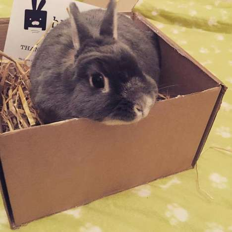 Pet Pampering Subscriptions - This Online Service Delivers Monthly Boxes of All-Natural Bunny Treats