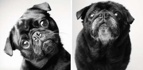 Aging Dog Portraits - This Collection of Dog Photos Shows Pets at Different Stages of Thier Lives
