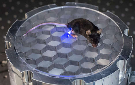 Wireless Charging Rodents - These Stanford Scientists Implanted Live Mice's Brains with Wireless LED