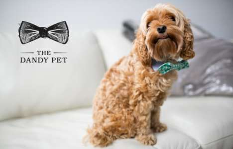 Dapper Pet Accessory Branding - The Dandy Pet Accessories Feature Unique Patterns and Colors