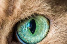 Vivid Cat Eye Photography