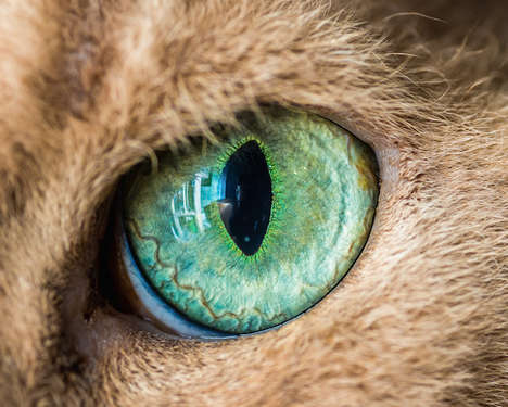 Vivid Cat Eye Photography - These Macro Images of Cat Eyes Peers Deeply into Our Feline Friends