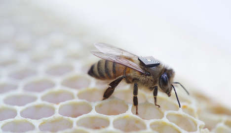 Bee-Tracking Wearables - These RFID Trackers for Insects Could Solve the Bee Crisis