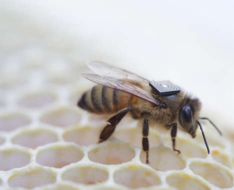 Bee-Tracking Wearables