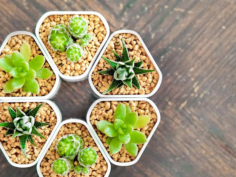 Magnetic Self-Watering Planters