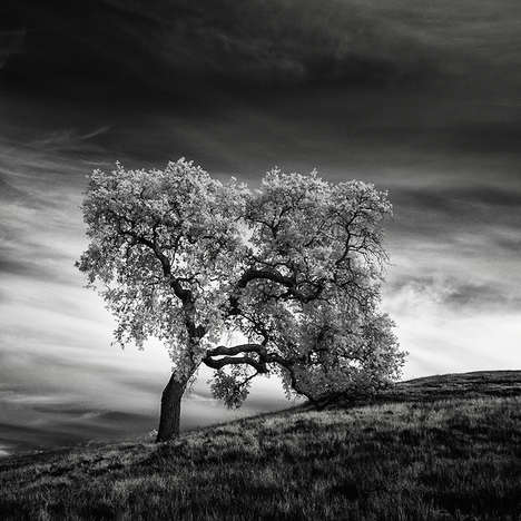 Desolate Infrared Photography - Photographer Nathan Wirth Views California Through an Infrared Lens