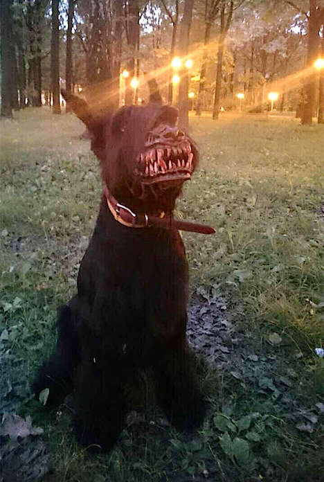 Werewolf Dog Muzzles - This Bizzare Dog Muzzle Turns Puppies into Ferocious Beasts
