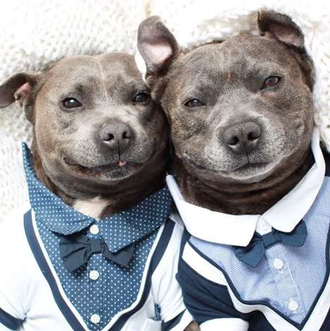 Brotherly Pit Bull Photography - The @the_blueboys Captures Rest, Relaxation and Canine Antics