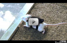 Skydiving Mice