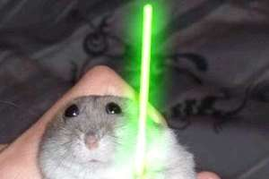 Animals Catch the Lightsaber Craze