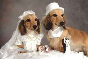 Paired Up Pets Get Hitched