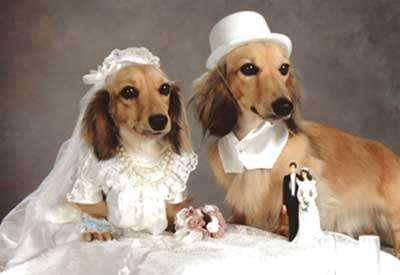 Animal Weddings
