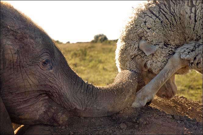 Emotion-Evoking Animal Friendships
